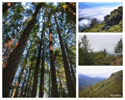 sights... NATURAL Beauty… 13.5 mile hike to the East Peak of Mount Tamalpais. The day started on a high and ended on a high - with lots of LOVELY things in between… I couldn't ask for a better day! Good trails… Good views… Good friends… Good fun… Why I LOVE the Bay Area…